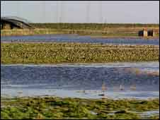 Waders at Orford Ness
