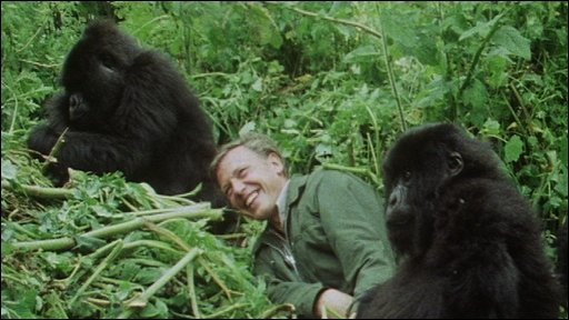 Sir David Attenborough first meets the mountain gorilla