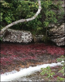 Cano Cristales famed for its pink colour