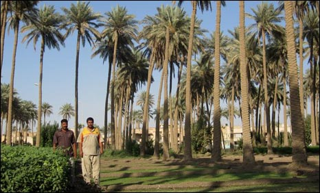 Date farmers Idris and Sarieh Alaa al-Din (photo by Hugh Sykes/BBC)
