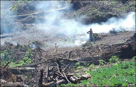 Burning trees to clear land for settlement in Kenya's Mau forest