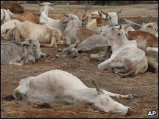 Carcasses amongst livestock in Kenya