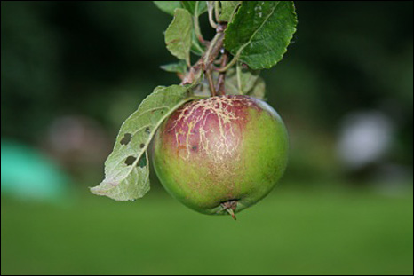 _46462754_466_apple_pn