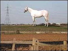 Mark Wallinger's white horse