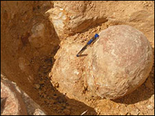 Dinosaur egg found at the Tamil Nadu site