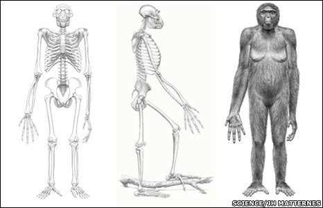 Ardipithecus artist's conception (Science)