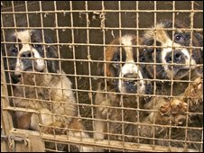 Three of the animals found by the RSPCA