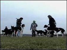 Dog walkers generic image