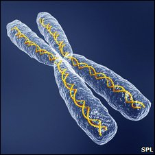 Chromosome depiction (SPL)