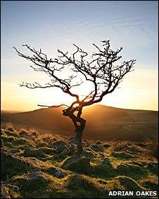 Tree on Dartmoor