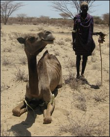 A Turkana man with camel