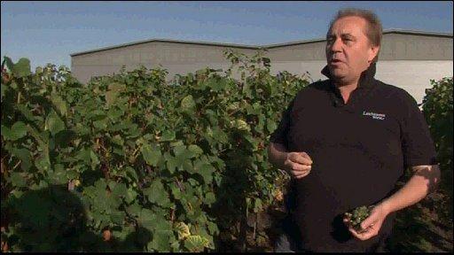 Wine advisor Ian Fritz