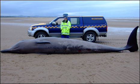 Coastguard with whale carcass