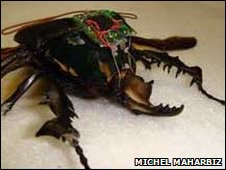 One of the cyborg beetles