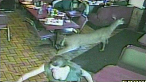 Deer in restaurant