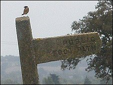 Stonechat on public footpath sign