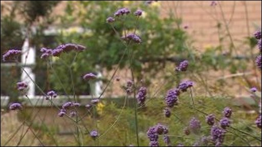Velindre hospital garden