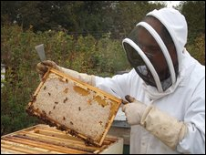 Removing the frames from the hive