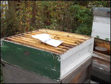 how to get rid of varroa mites naturally