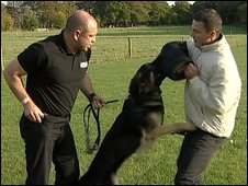Police dog being trained