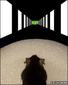 Mouse in virtual reality maze (Forrest Collman)