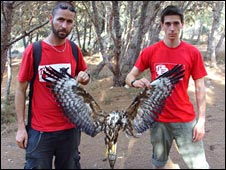 BirdLife Malta team members hold the body of a dead honey buzzard, pic courtesy of BirdLife Malta