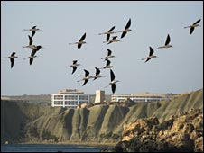 Black winged stilts over Malta, pic courtesy of BirdLife Malta