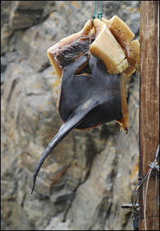 Drying whalemeat