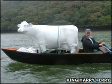 Cow rowed up river