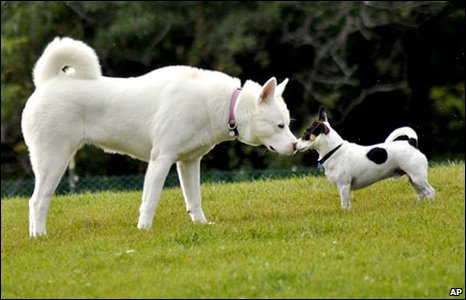 Two dogs meet in a park  (AP Photo/Heather Ainsworth)