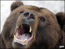 Russian bear in the wild - file photo