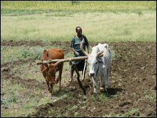 Farmer in Kobo ploughs his plot of land