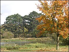 Lake at Hatfield Forest
