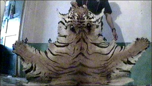 Tiger skin for sale