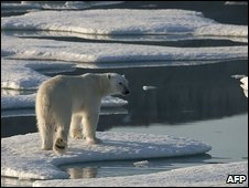 Polar bear on ice (AFP)