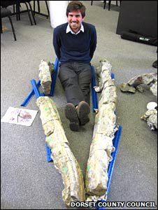The lower jaws of the pliosaur