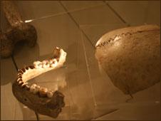 Bones from Kendrick's Cave