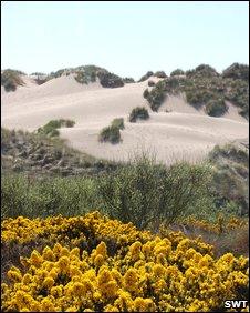 Menie dunes [Pic: SWT]