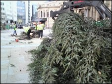 Felled Christmas tree