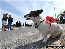 Dog wearing a poppy