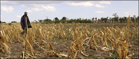 Drought-affected field in kenya