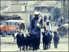 Man with goats in Afghan village