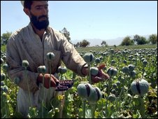 Afghan in field of poppies