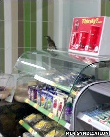 Tesco starling