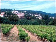 Vineyard country in Saint Tropez, France