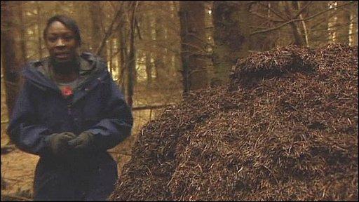 Giant ants' nests