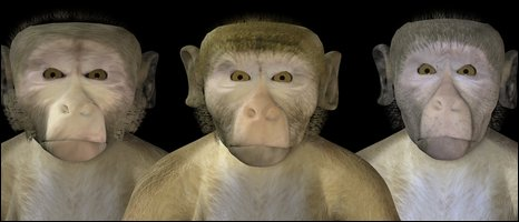 Synthetic macaques, A Ghazanfar