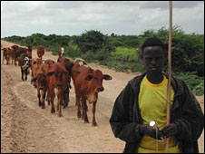Somali cattle-herder (file photo)