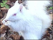 St Martin's Church white squirrel