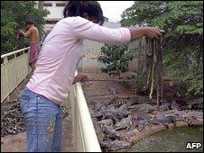 Crocodile farm, Phnom Penh Cambodia 2004